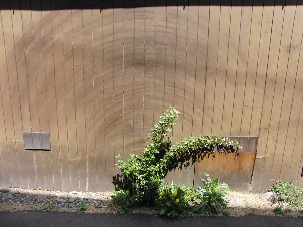 植物ワイパーと高架下の鍾乳石_e0206496_15551515.jpg