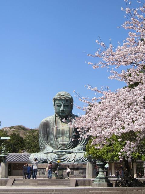 桜と大仏 @鎌倉_b0145398_17503246.jpg