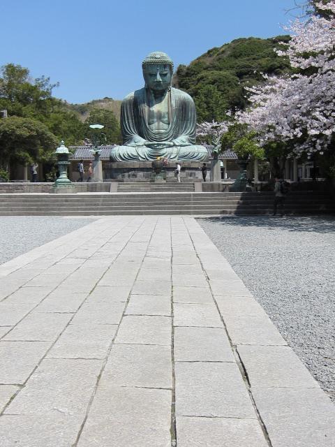 桜と大仏 @鎌倉_b0145398_17584064.jpg