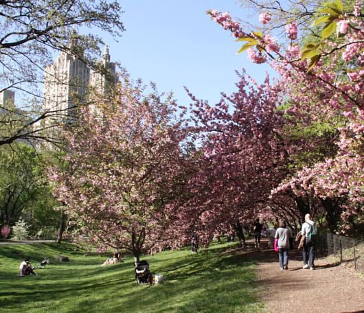 心あたたまるセントラルパークの桜のトンネルへ_b0007805_9211793.jpg