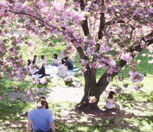 心あたたまるセントラルパークの桜のトンネルへ_b0007805_9224880.jpg