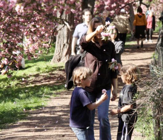 心あたたまるセントラルパークの桜のトンネルへ_b0007805_922518.jpg