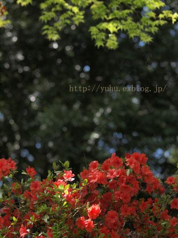 a0021110_16344257.jpg