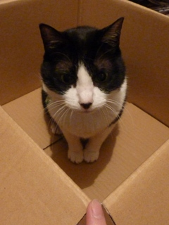 箱にはいってる猫 空編。_a0143140_21172967.jpg