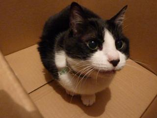 箱にはいってる猫 空編。_a0143140_2118269.jpg
