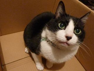 箱にはいってる猫 空編。_a0143140_2119230.jpg