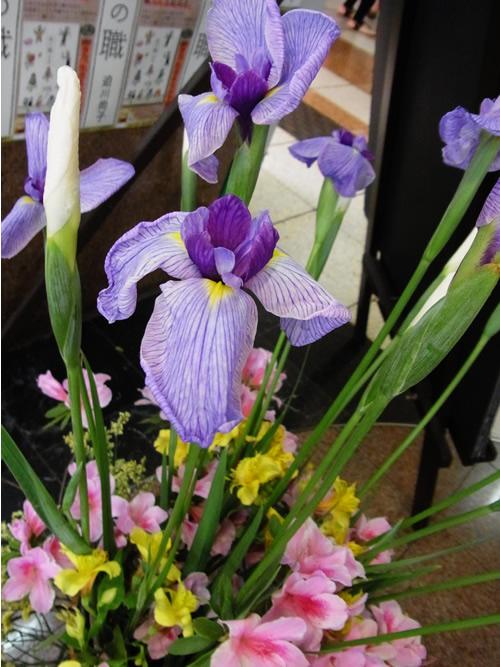 5月5日こどもの日、ベルク前では菖蒲の花でおでむかえ、スタッフ手作りの鯉のぼりが泳いでいました★_c0069047_1505553.jpg