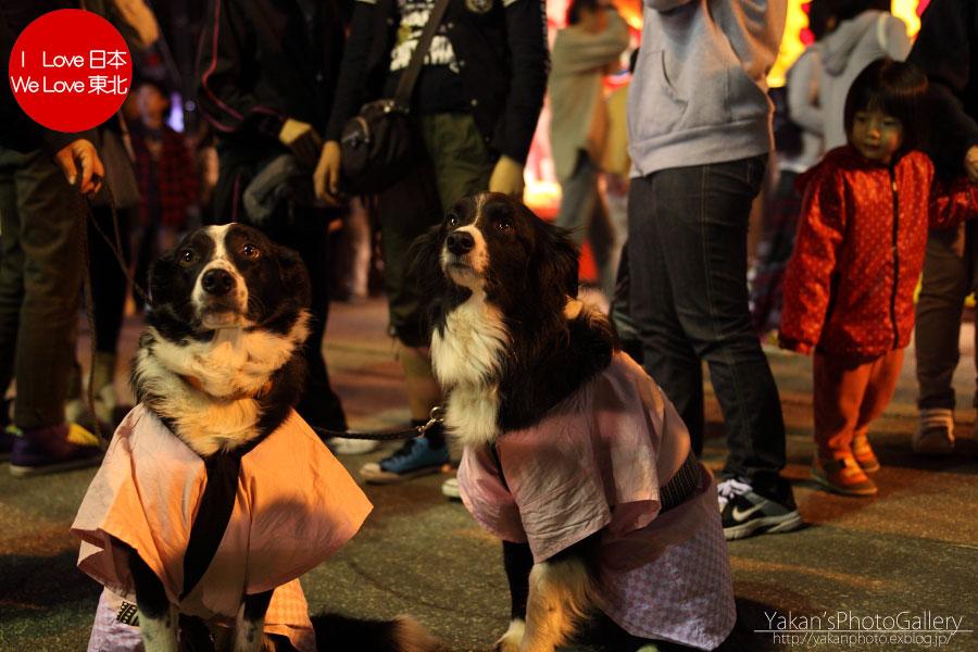 南砺市福野 「夜高祭」 写真撮影記06 小動物編_b0157849_23121055.jpg