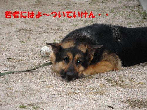 b0113663_11231827.jpg