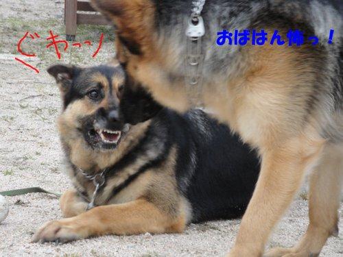 b0113663_11235854.jpg