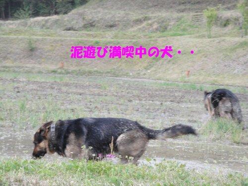 b0113663_113036100.jpg