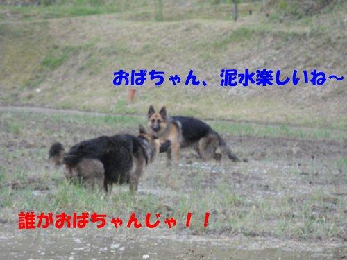 b0113663_11311970.jpg