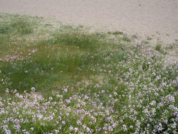 2011/05/06 三浦海岸から三崎港@ゾロ目散歩:その1_b0171364_13174832.jpg