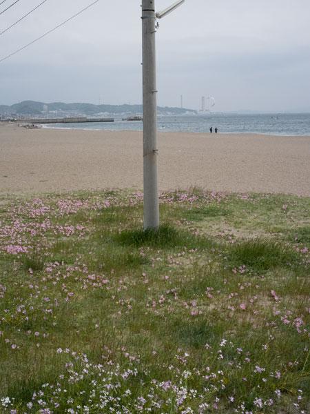 2011/05/06 三浦海岸から三崎港@ゾロ目散歩:その1_b0171364_13193041.jpg