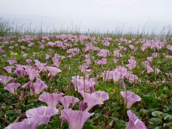 2011/05/06 三浦海岸から三崎港@ゾロ目散歩:その1_b0171364_13194615.jpg