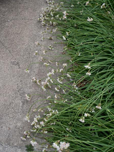 2011/05/06 三浦海岸から三崎港@ゾロ目散歩:その2_b0171364_13351897.jpg