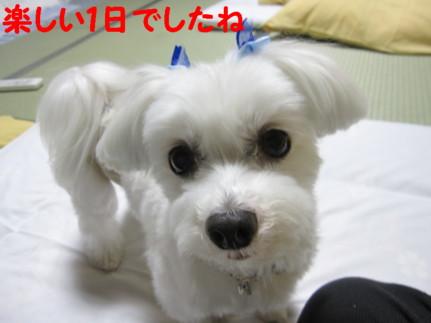 b0193480_2148741.jpg