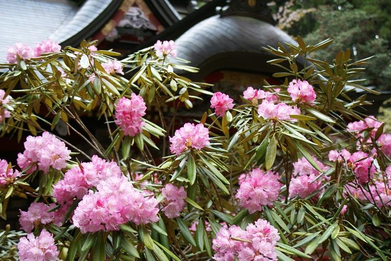 花園神社祭礼 北茨城市_b0183886_5492275.jpg