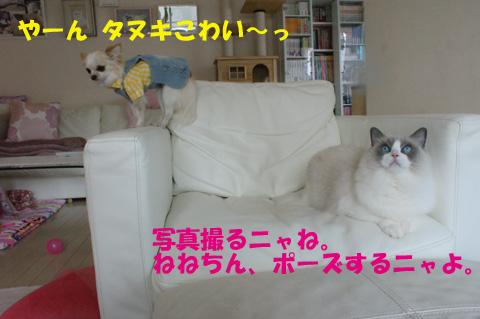 f0014893_2212120.jpg