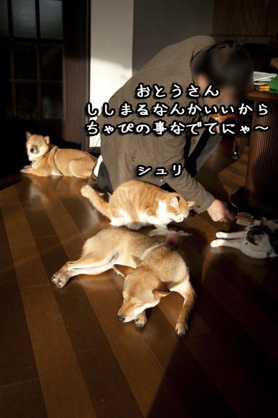 b0141397_11193667.jpg