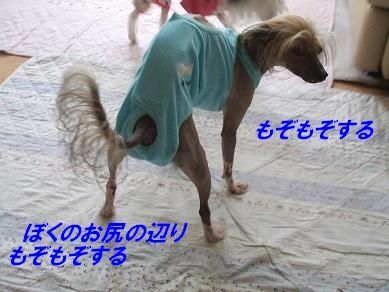 f0179203_1826550.jpg