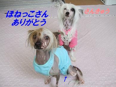 f0179203_18344065.jpg