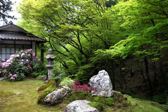 阿弥陀寺の春_e0048413_2250523.jpg