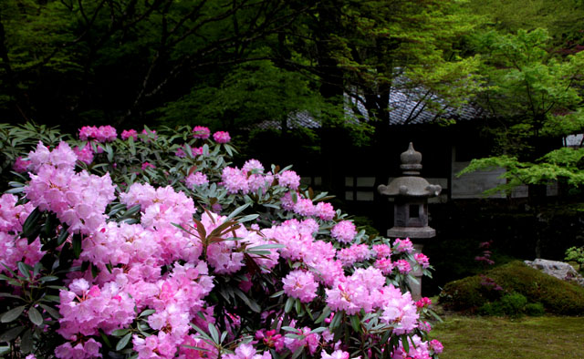 阿弥陀寺の春_e0048413_2253149.jpg