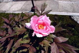 境内は花盛り_c0170415_18105690.jpg