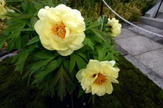 境内は花盛り_c0170415_1811206.jpg