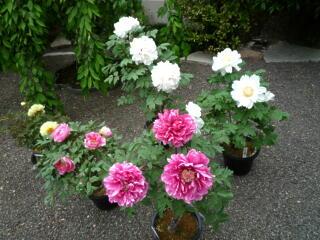 境内は花盛り_c0170415_18114484.jpg