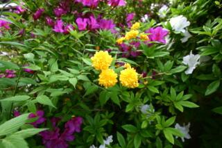 境内は花盛り_c0170415_18122537.jpg