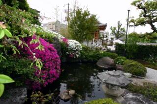 境内は花盛り_c0170415_1812969.jpg