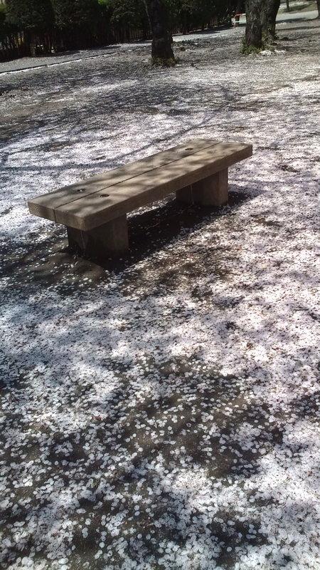 ウェイティングスペース2 桜のベンチ_a0042928_6343517.jpg