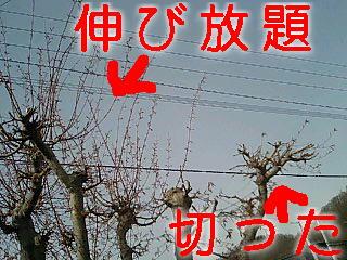 c0117239_8403410.jpg
