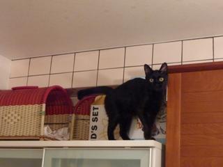 高いとこ猫 ろった編。_a0143140_22281699.jpg
