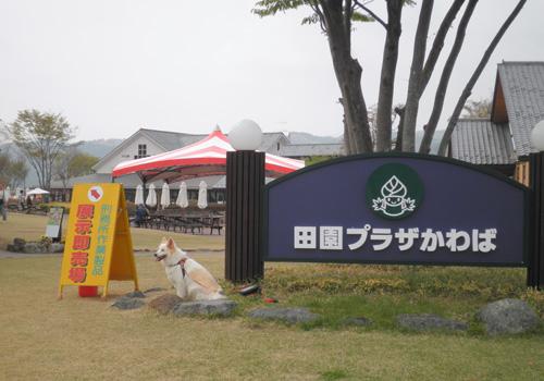 沼田まで行ってきました〜_d0126264_1841410.jpg