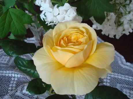バラが咲いた_d0006467_20372423.jpg