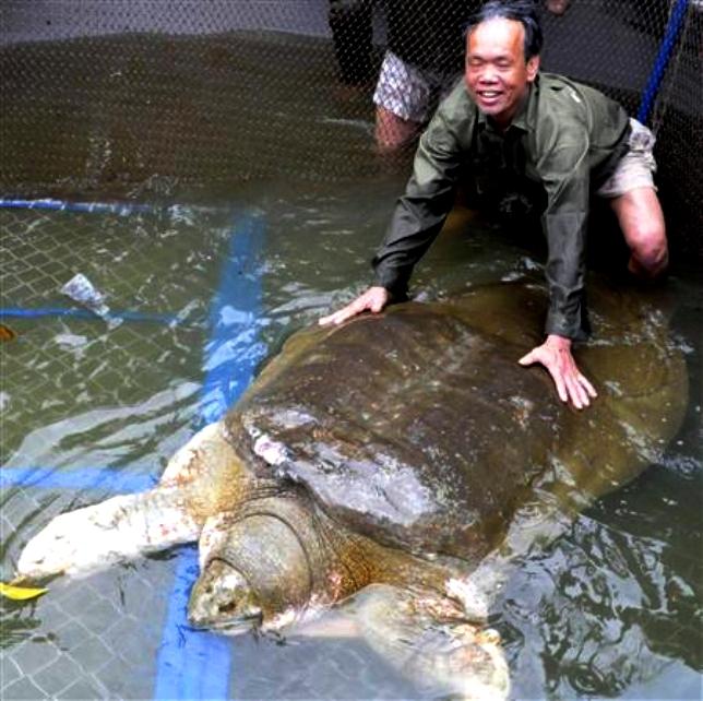 苏州动物园巨鳖