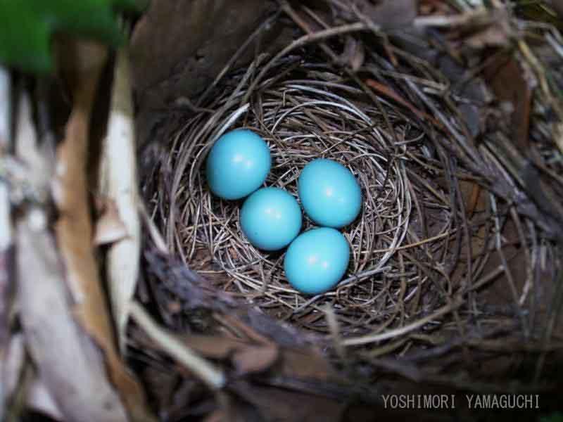 青い卵_e0197869_0123454.jpg