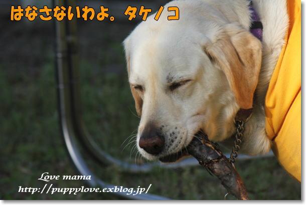 b0136683_2182035.jpg