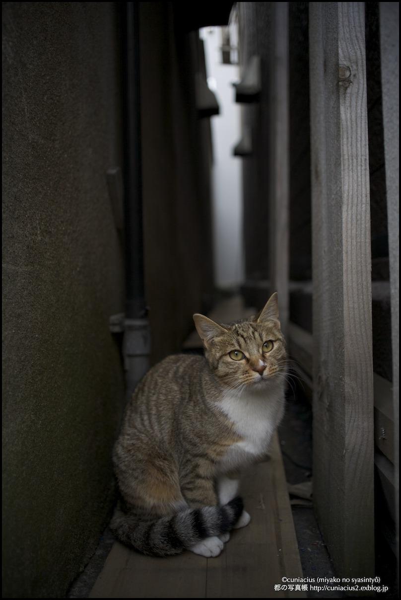 小樽花園の猫1_f0042194_1531643.jpg
