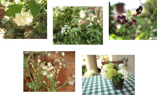 週末の、ガーデンランチ_d0174704_2334293.jpg
