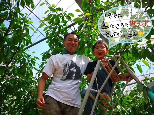去年のさくらんぼ狩りの様子_b0181406_20113673.jpg