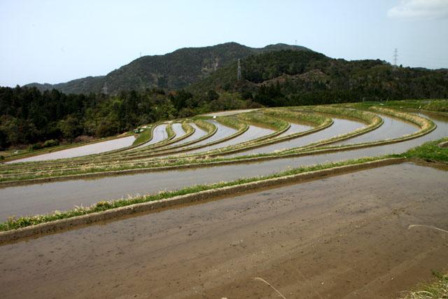 越畑 樒原の棚田_e0048413_18235288.jpg