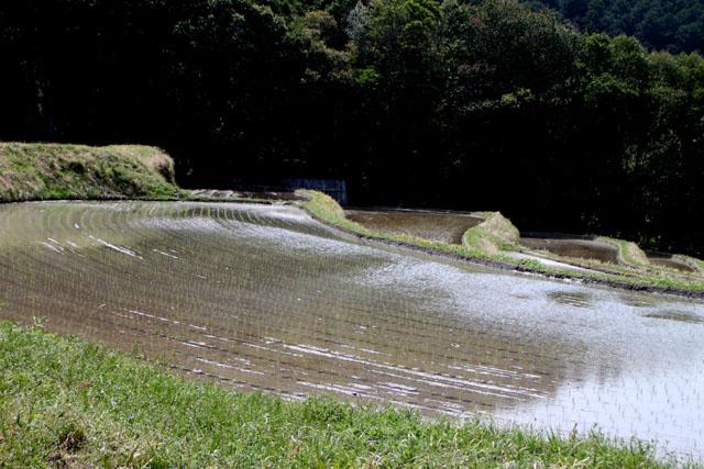 越畑 樒原の棚田_e0048413_1824399.jpg