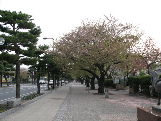 山桜_b0207642_1131982.jpg