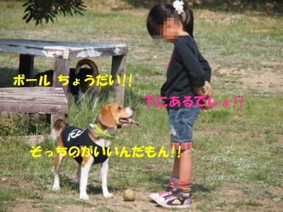 c0119142_8265781.jpg
