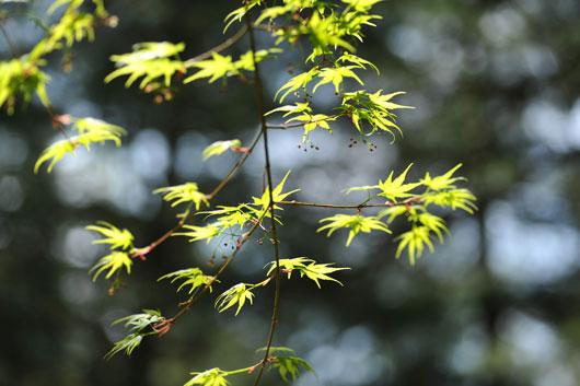 樹木公園にて(Ⅰ)_c0093046_813340.jpg