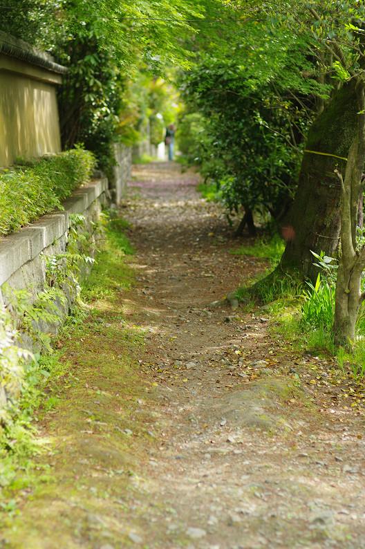 哲学の道をワンコと散歩..._f0152550_18531185.jpg